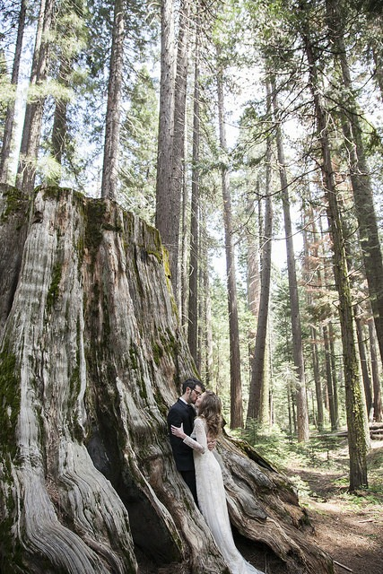 tree trunk kiss sarah dave peters paige